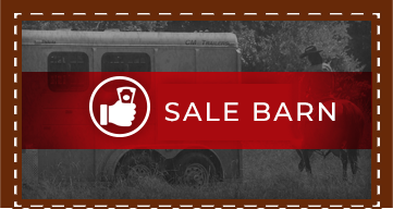 Trailers on Special at Trailer Specialist